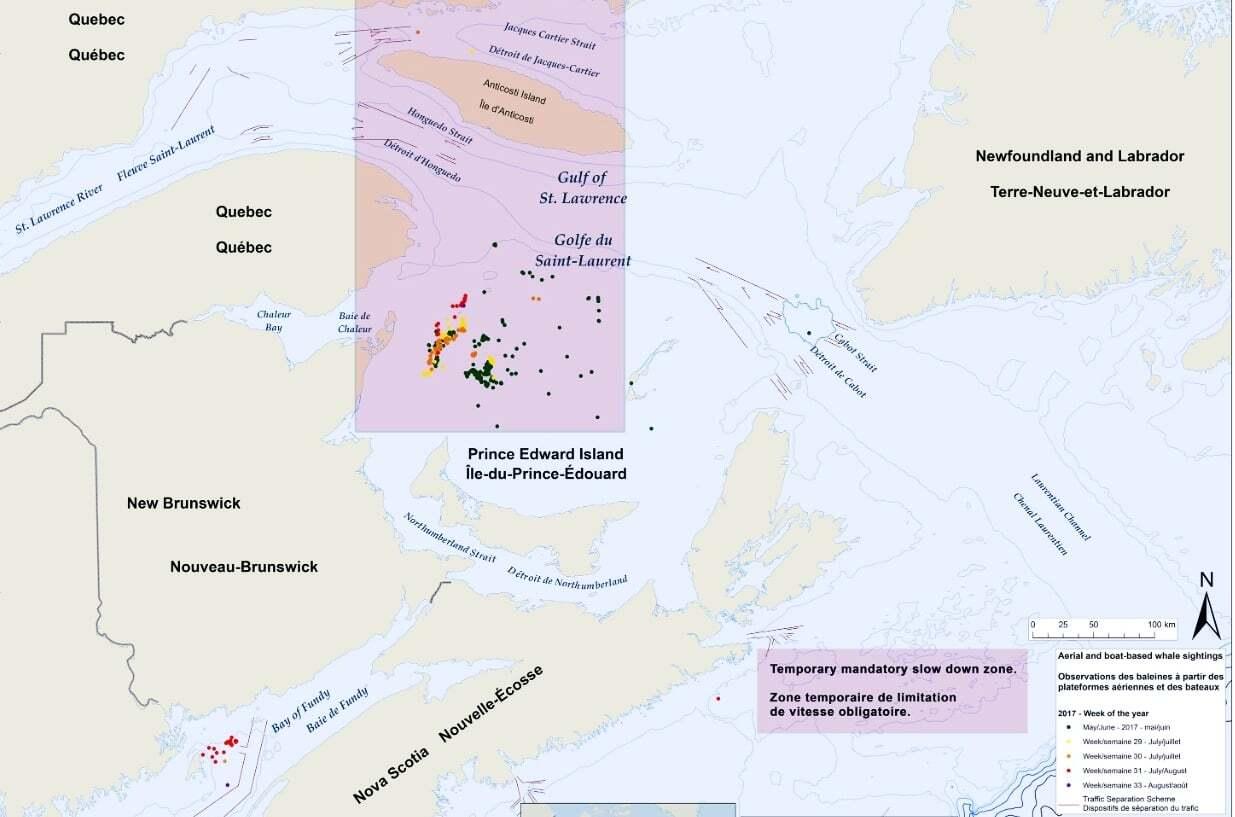 Kanada ulaştırma bakanlığı balina alanı hız limiti