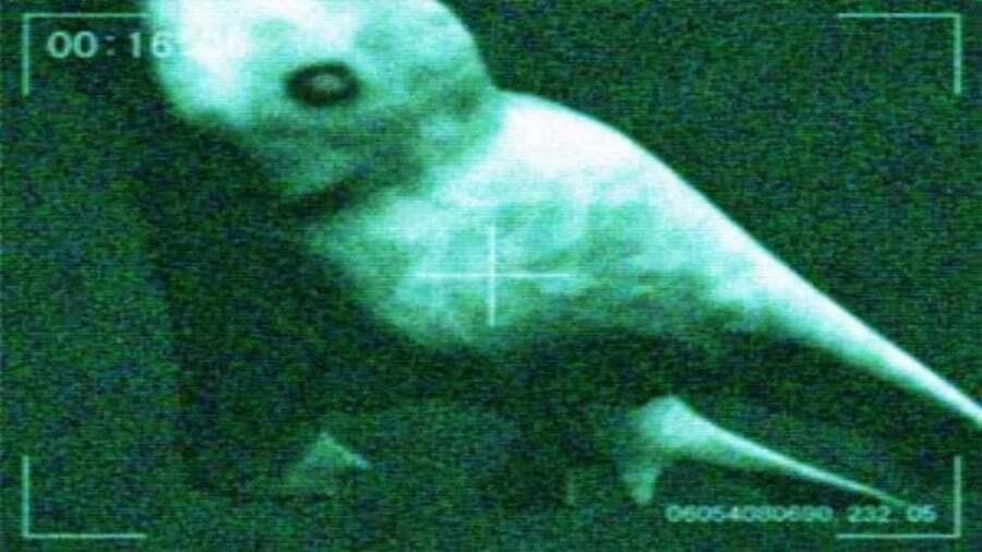 ilginc - ningens 2 - Ningen Efsanesi | Varlığı Kabul Edilmeyen İnsanımsı Deniz Canlıları