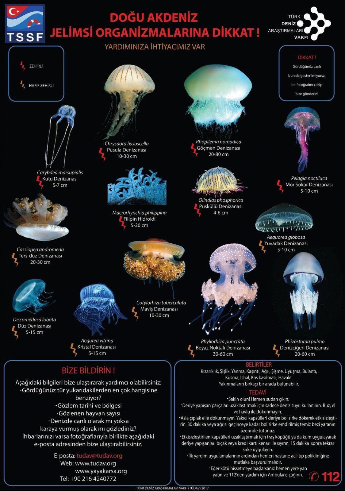 deniz-kultur - 1 3 - Doğu Akdeniz Deniz Anaları Referansı
