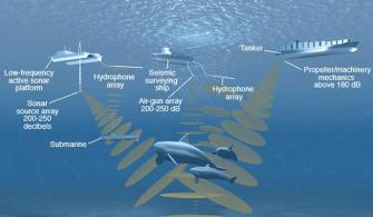 gemi kaynaklı sesin deniz canlılarına etkisi
