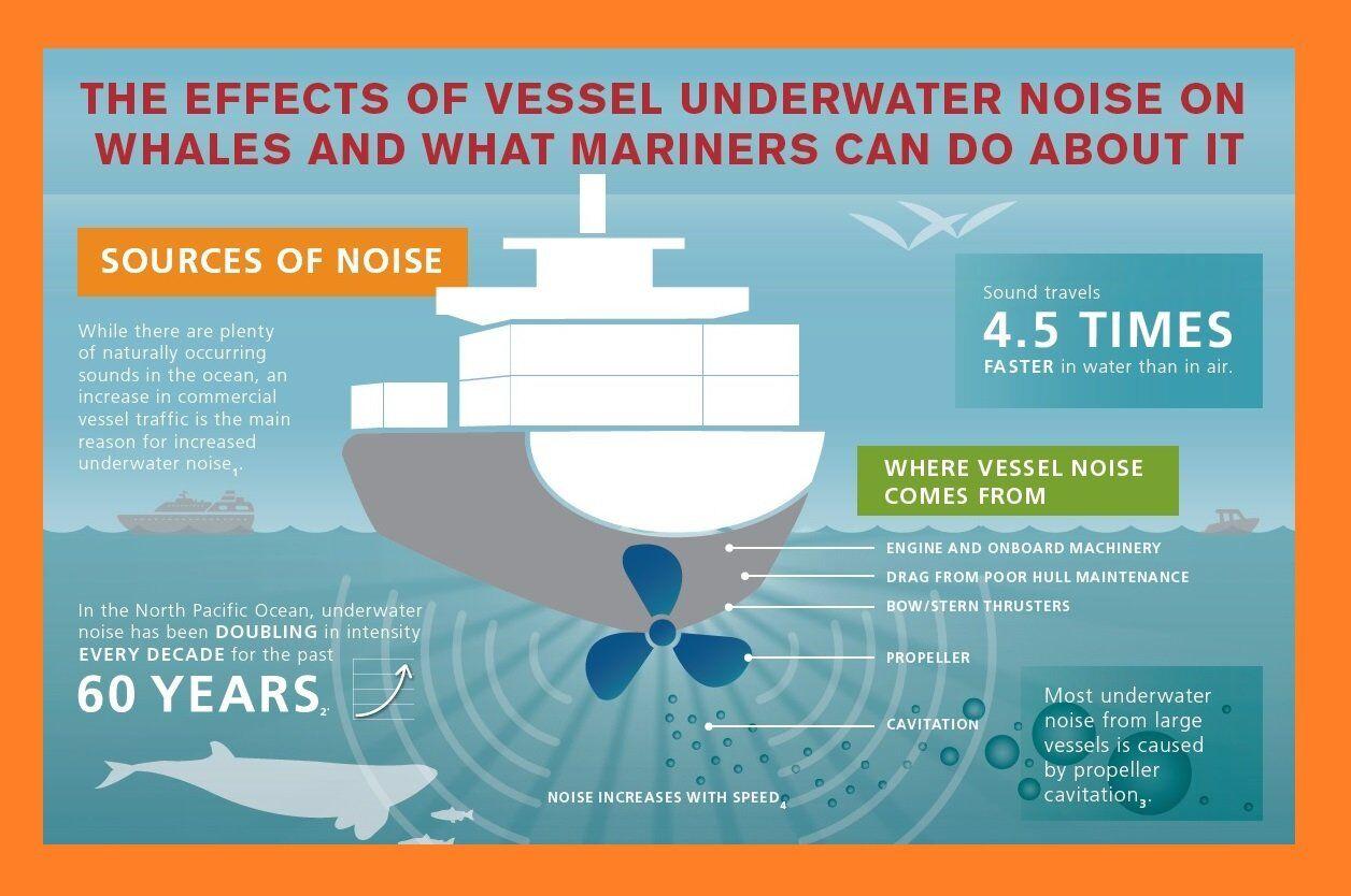 ilginc - sesin insan ve deniz canlılarına etkisi 1 - Gemi Kaynaklı Sesin Deniz Canlılarına Etkisi