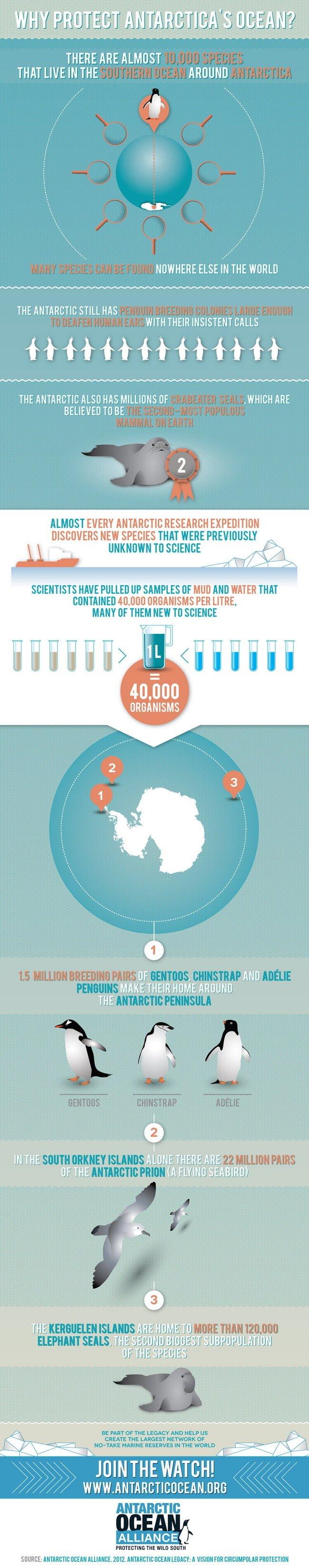 deniz-kultur - antartikayı korumalıyız - Antartika Neden Korunmalıdır