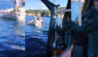 Köpek Balığına Tekma Atan Balıkçıya Ceza