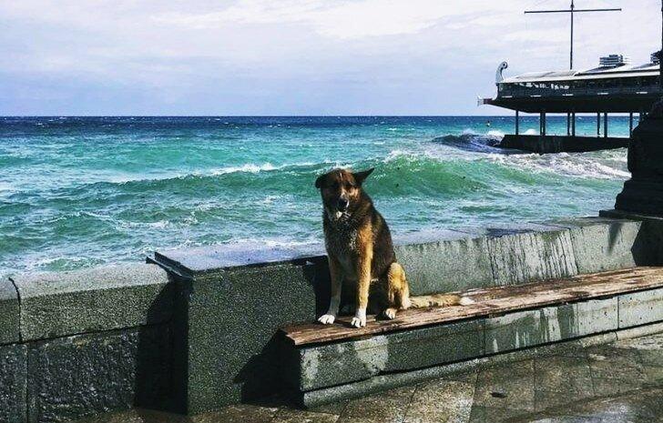 ilginc - Haçiko Muhtar Yalta Şehri 1 - Denizde Boğulan Sahibini 9 Yıldır Bekliyor