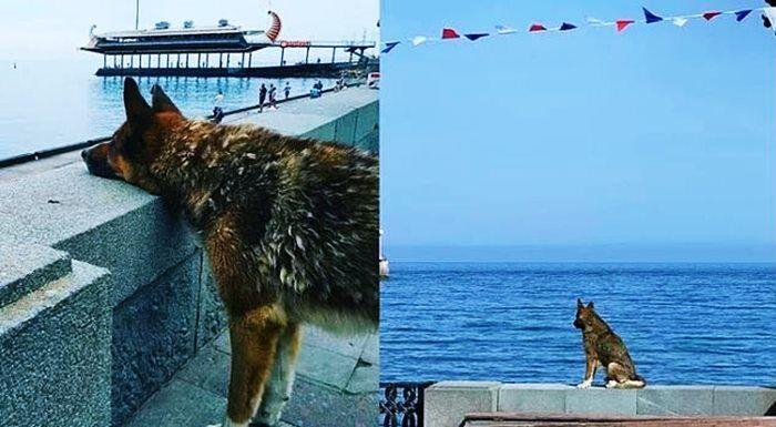 ilginc - Kırım Haçiko - Denizde Boğulan Sahibini 9 Yıldır Bekliyor